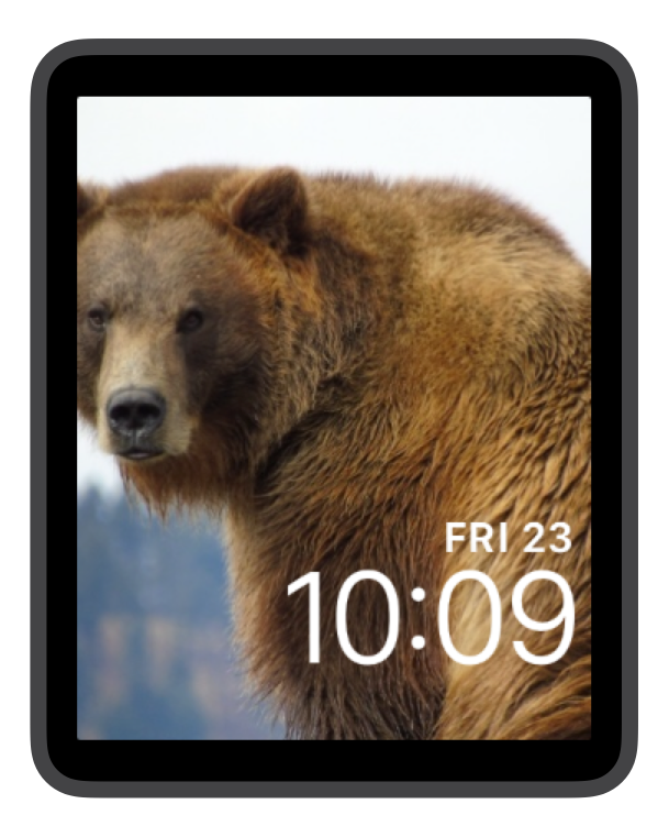 Brown Bear Grizzly